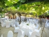 weddings-in-malta-olive-groves-1